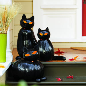 Black Cat Pumpkins